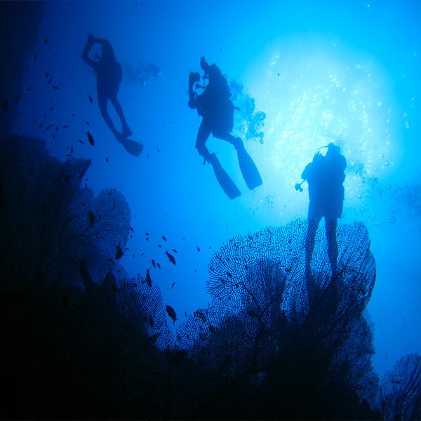 Scuba Diving - Courses - Aloha Ke Akua